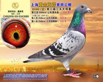 上海黄金海岸决赛第281名