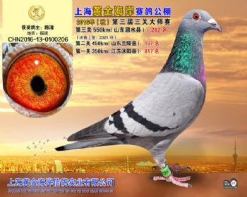 上海黄金海岸决赛第282名