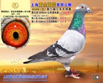 上海黄金海岸决赛第283名