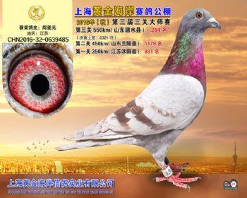 上海黄金海岸决赛第284名