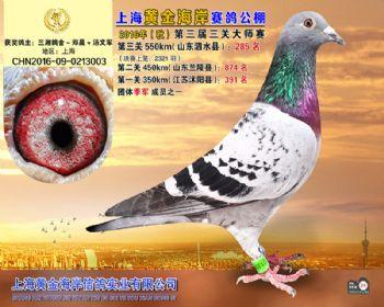 上海黄金海岸决赛第285名