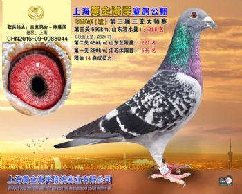 上海黄金海岸决赛第288名