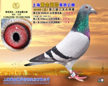 上海黄金海岸决赛第289名