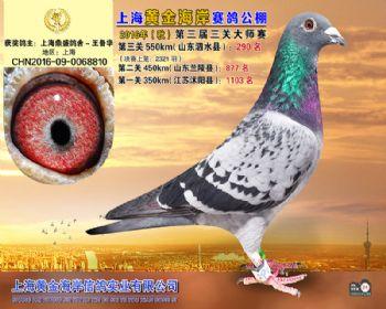 上海黄金海岸决赛第290名