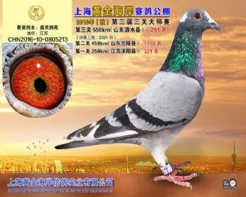 上海黄金海岸决赛第291名