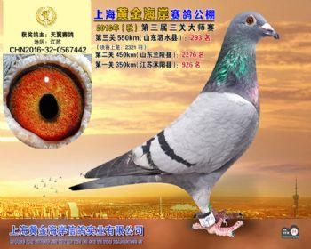 上海黄金海岸决赛第293名