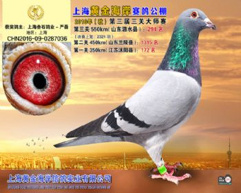 上海黄金海岸决赛第294名