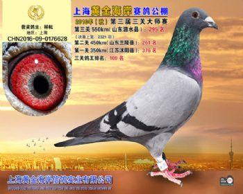 上海黄金海岸决赛第295名