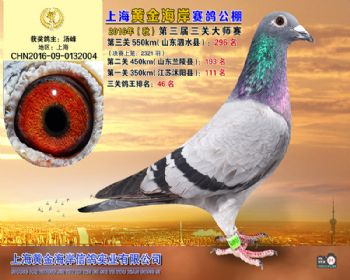 上海黄金海岸决赛第296名