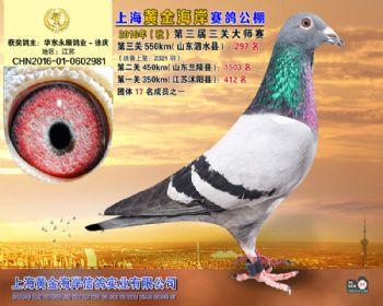 上海黄金海岸决赛第297名