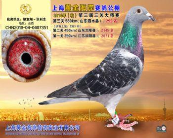 上海黄金海岸决赛第299名