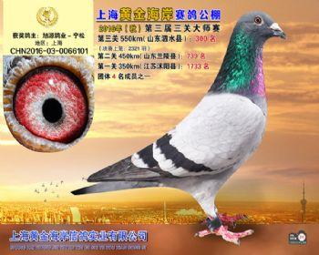 上海黄金海岸决赛第300名