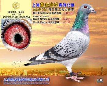 上海黄金海岸决赛第301名