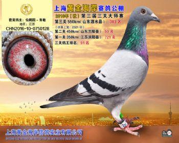 上海黄金海岸决赛第303名