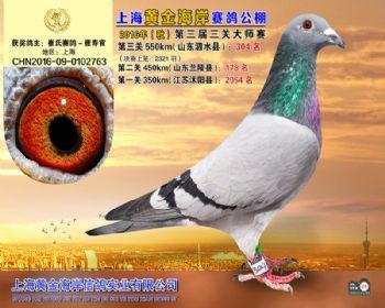 上海黄金海岸决赛第304名