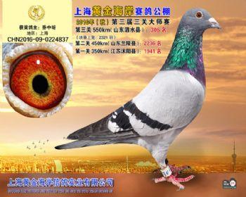 上海黄金海岸决赛第306名
