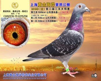 上海黄金海岸决赛第307名