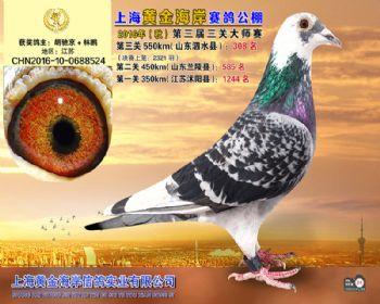 上海黄金海岸决赛第308名