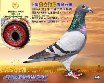 上海黄金海岸决赛第309名