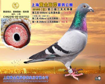 上海黄金海岸决赛第310名