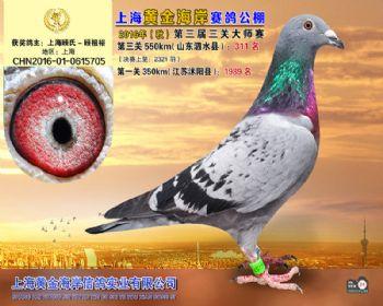 上海黄金海岸决赛第311名