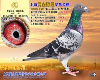 上海黄金海岸决赛第312名