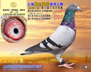 上海黄金海岸决赛第313名