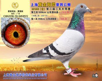 上海黄金海岸决赛第315名