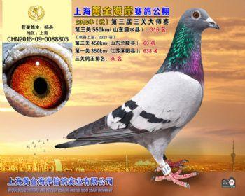 上海黄金海岸决赛第316名