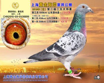 上海黄金海岸决赛第317名