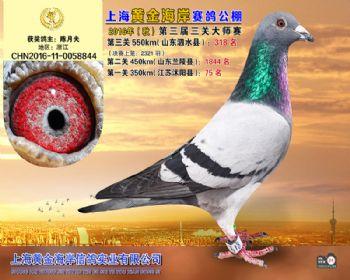 上海黄金海岸决赛第318名