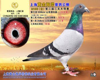 上海黄金海岸决赛第319名