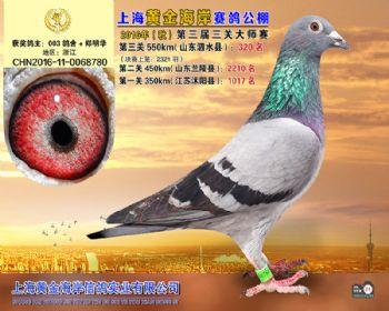 上海黄金海岸决赛第320名