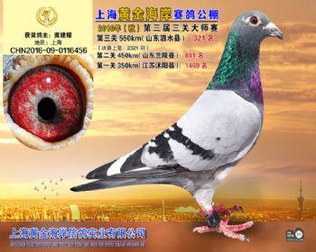 上海黄金海岸决赛第321名