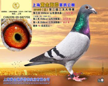 上海黄金海岸决赛第322名