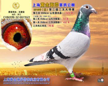 上海黄金海岸决赛第323名