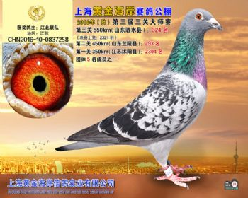 上海黄金海岸决赛第324名