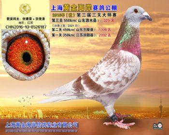 上海黄金海岸决赛第325名
