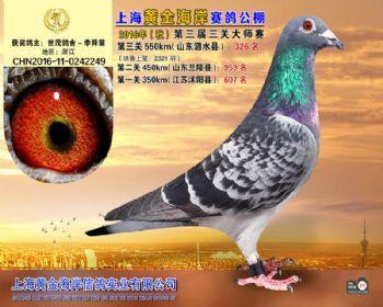 上海黄金海岸决赛第326名