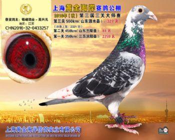 上海黄金海岸决赛第327名
