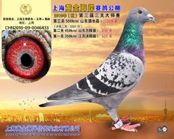 上海黄金海岸决赛第328名