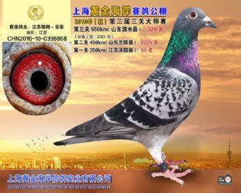 上海黄金海岸决赛第329名
