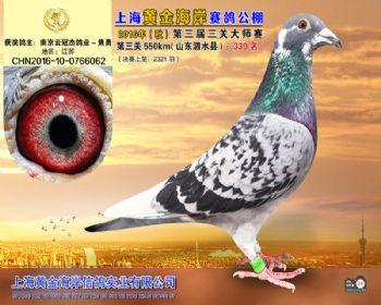 上海黄金海岸决赛第330名