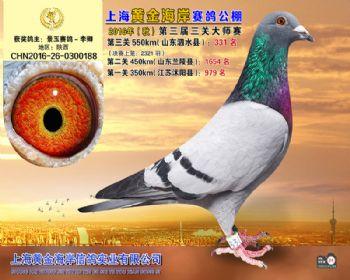 上海黄金海岸决赛第331名