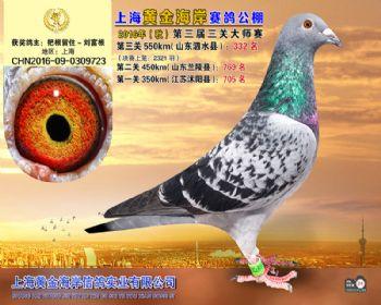 上海黄金海岸决赛第332名