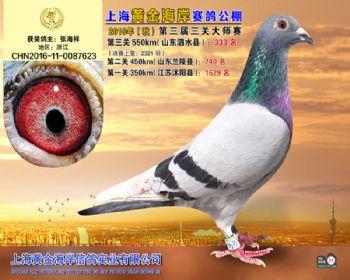 上海黄金海岸决赛第333名