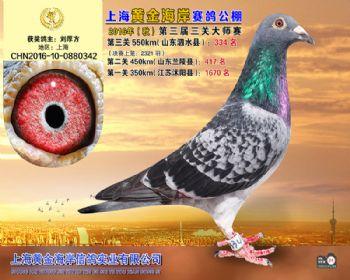 上海黄金海岸决赛第334名