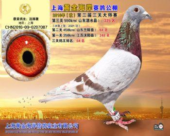 上海黄金海岸决赛第335名