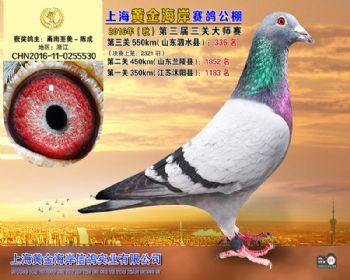 上海黄金海岸决赛第336名