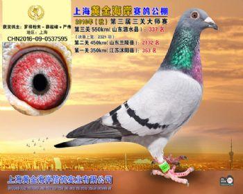 上海黄金海岸决赛第337名